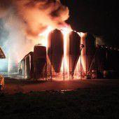 100 Rinder sterben bei Großbrand