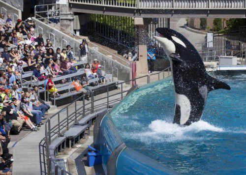 Tierschützer protestieren schon lange gegen die Shows. Die Becken der Tiere seien vielfach zu klein, sagen sie.