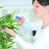 Richtige Pflege für Zimmerpflanzen