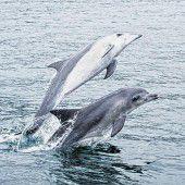 Delfine und Wale entdecken