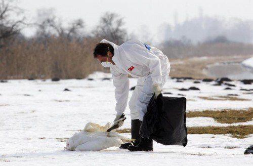 Bilder wie diese gab es wegen der Vogelgrippe vor zehn Jahren des Öfteren.