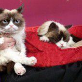 Grumpy Cat im Doppelpack
