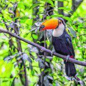 Unglaubliche Vielfalt an Arten in Monteverde