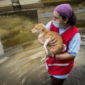 Tierschutz soll nach der Flut Seuchen vorbeugen