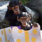 Bescherung im Taronga Zoo