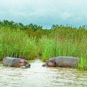 Zwischen Krokodilen und Nilpferden