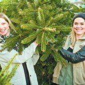 Letztes Rennen um den schönsten Weihnachtsbaum