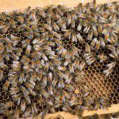 Brauchen wir Bienen?