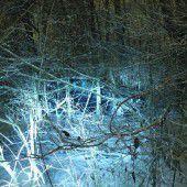 Berauscht direkt ins Unterholz