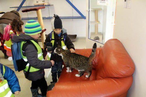 Das Jahresprojekt soll Kindern die Angst vor Tieren nehmen.