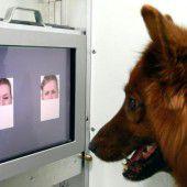 Studie: Hunde erkennen Emotionen von Menschen