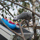Forscher wollen Musikinstrumente für Papageien bauen