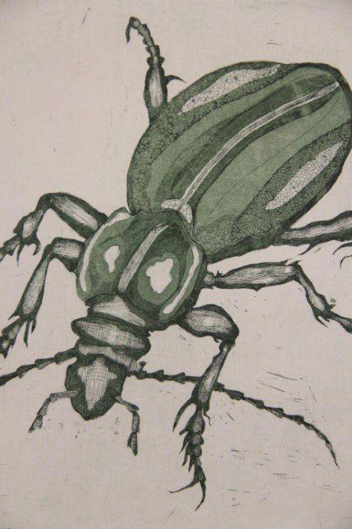Die Bregenzerwälderin Melanie Berlinger mag Insekten.