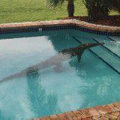 Ungebetener Gast im Swimmingpool