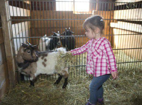 Junge Besucher können auf Gut Bozenau lernen, wie man mit Tieren richtig umgeht.