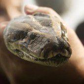 Python beißt bei Touristin zu