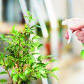 Optimale Pflege für Winterpflanzen