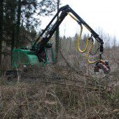 Viele Eschen am Illspitz abgeholzt – Sorge um das Naherholungsgebiet
