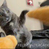 Festivaljury prämiert das beste Katzenvideo