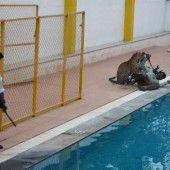 Leopard wütete in einer Schule