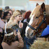 Fachmesse: Pferd Bodensee