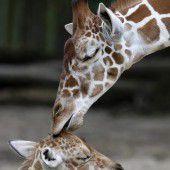 Kuss vom großen Bruder
