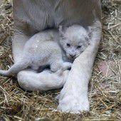 In Mamas Armen
