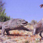 Mensch hat Mitschuld am Aussterben australischer Mega-Vögel