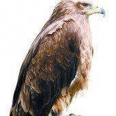 Aus für Adlerwarte am Pfänder