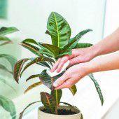 Die richtige Pflege für die Zimmerpflanzen