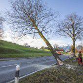 Baumrodung für mehr Sicherheit