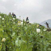 Mit der Machete gegen das Opium  in Myanmar