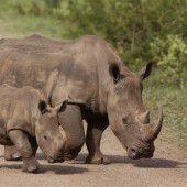 Südafrika bekämpft  Wilderer mit Drohnen