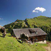 Verzicht auf Alp wegen Angst vor TBC-Erreger