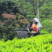 Ceylon-Tees aus Sri Lanka