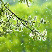 Schutz vor dem Pollenflug