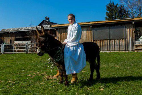 Die Dornbirnerin Laura Rhomberg (13) führt morgen auf ihrer Eselin Lilly die Palmprozession zur Hatler Kirche an.