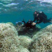 El Niño gefährdet das Great Barrier Reef