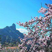 Zur Mandelblüte in den Süden