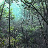 Letzter Urwald der Insel