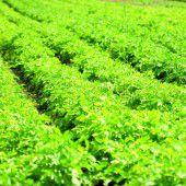 Vorbildliche Betriebe: Naturkreislauf beginnt im fruchtbaren Boden