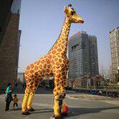 Eine Giraffe aus 40.000 Legosteinen