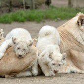 Mamas kleine weiße Rasselbande