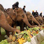 Elefantenpolo: Blaues Blut auf dicker Haut