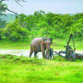 Sri Lanka: Safari im Indischen Ozean