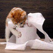 Wenn d Katz i d Stuba schiißt, denn steckt ma eara d Nasa drii.