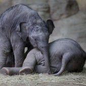 Im Elefantengehege geht es rund