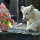 Kulinarische Ostern auch bei den Löwen
