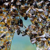 Was wir von den Bienen lernen können