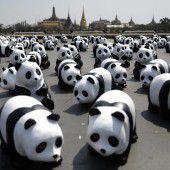 1600 Pandas aus Pappmaché
